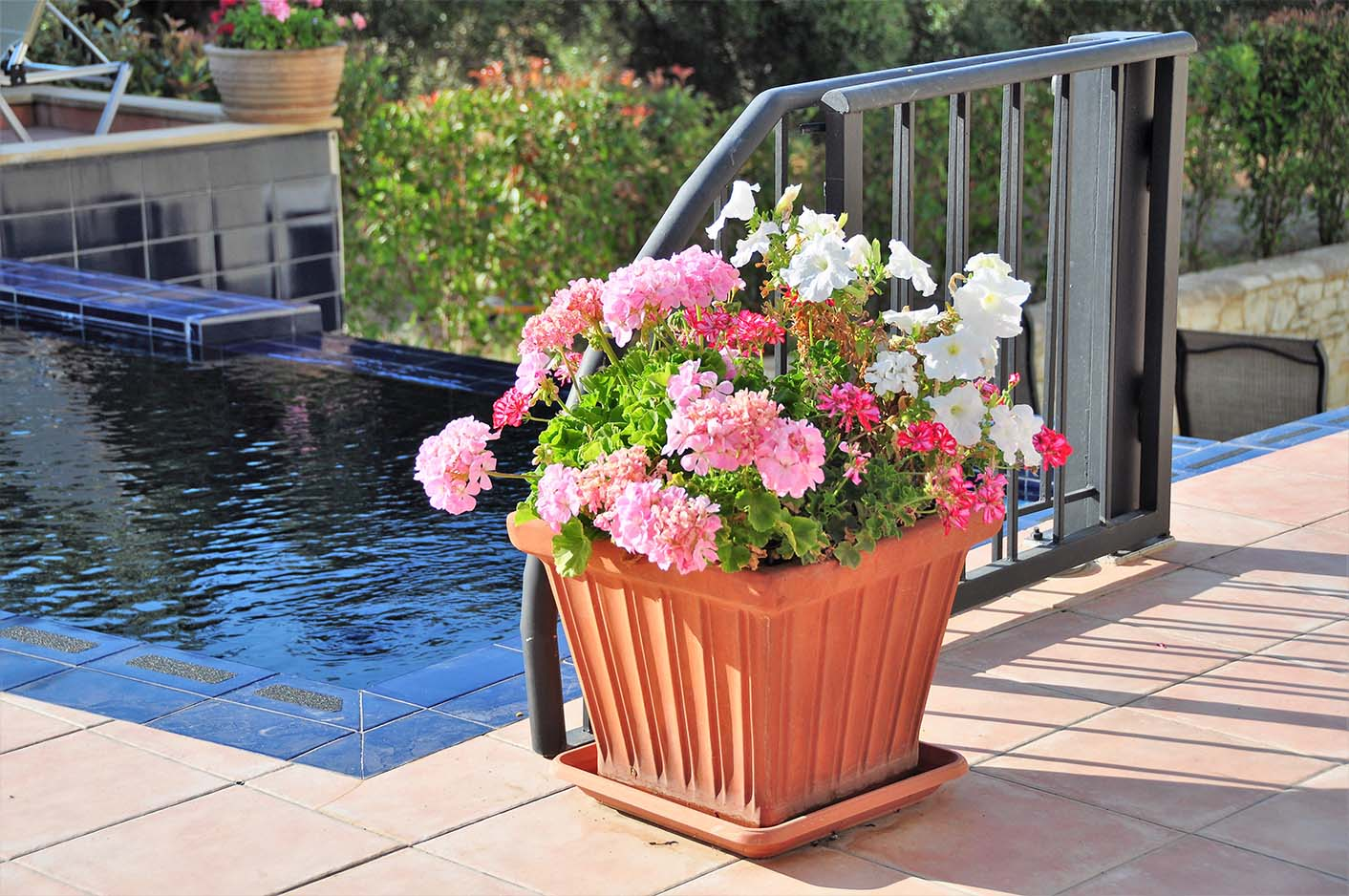flowers by the pool